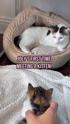 Cute Wild Animals, Cute Little Animals, Cute Funny Animals, Animals Beautiful, Animals And Pets, Funny Animals With Captions, Funny Cat Pictures, Cute Animal Pictures, Cute Little Kittens