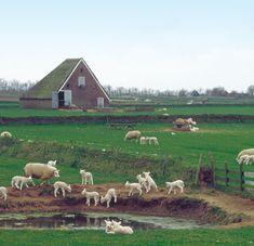 5-foto-2 De Lieuw.nl leuke info site met o.a mooie/leerzame wandelroutes