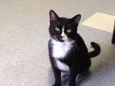 Surrendered, gassy cat saved by no-kill shelter http://on.rocne.ws/1hBvK3y
