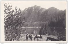 RP: Horse Back Riding , GREENOUGH , Montana , PU-1940