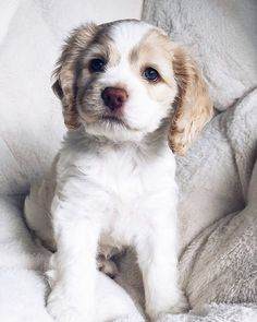 Excellent cute dogs info are available on our internet site. Have a look and you wont be sorry you did. Cute Little Puppies, Cute Little Animals, Cute Dogs And Puppies, Baby Puppies, Doggies, Perro Cocker Spaniel, Perros Golden Retriever, Animals And Pets, Funny Animals
