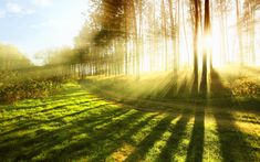 sunlight provides vitamin D, this helps the body absorb calcium, therefore increasing strength of bones