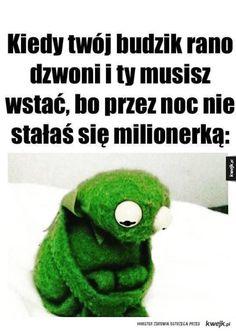 Funny Mems, Kermit, The Funny, Lol, Memes, Captions, Poland, Sisters, Comics
