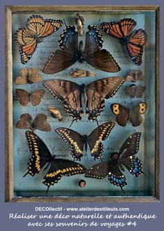 Butterfly Project, Butterfly Frame, Turbulence Deco, Graduation Photography, Natural History Museum, Create Photo, Helium Balloons, Photography Backdrops, Photography Hashtags