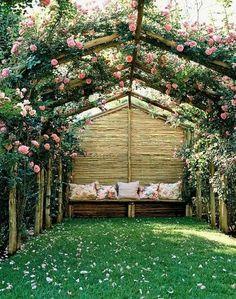 Розы плетущиеся