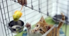 Picking A New Kitten: How To Test Her Temperament