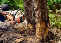 If you require #treeremoval in Marietta, GA, it's best to leave the task to a #professionaltreeservice due to help you avoid these four risks.