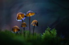 . : fantastic five : . - http://www.martin-pfister-photography.de/ A shot from last year with some really nice and very fragile mushrooms. The thin stripes in the bokeh are water stripes. Hope you like it...
