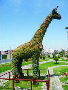 David Poma Huanca: El arte topiario, como alternativa del turismo en Tacna