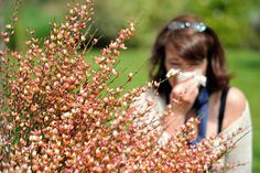 How to fight outdoor allergens