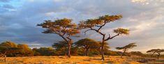 The shores of Lake Langano in Ethiopia http://www.mangoafricansafaris.com/