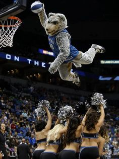 Oct 10, 2014: Minnesota Timberwolves mascot Crunch HES AWESOME