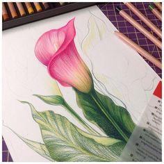 World of Flowers de Johanna Basford - Flower Art Drawing, Pencil Drawings Of Flowers, Flower Drawing Tutorials, Floral Drawing, Pencil Art Drawings, Pencil Colour Painting, Color Pencil Sketch, Colored Pencil Artwork, Coloured Pencils