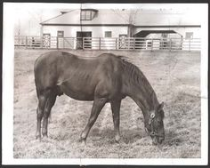 Man o'War at Faraway Farm in 1941