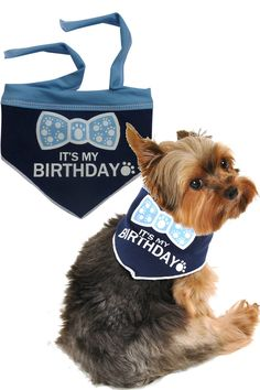 6b1c0a383 It s My Birthday (Boy) Bandana Scarf in color Blue White Dog Birthday