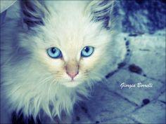 Occhi blu by Giorgia Borrelli, via 500px
