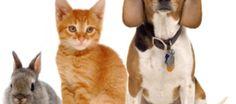 Pet readings