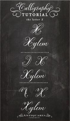 Capital T Calligraphy : capital, calligraphy, Calligraphy, Ideas, Lettering,