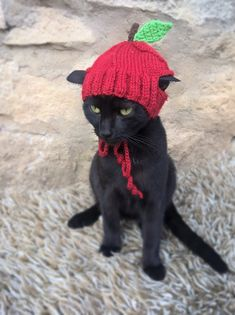 Apple Hat for Cat, Apple Pet Costume, Cat Outfit, Feline Accessory, Knitted Cost. - Annette Home Cute Animal Memes, Cute Animals, I Love Cats, Cute Cats, Cat Accessories, Cat Hat, Pet Costumes, Cats And Kittens, Cats In Hats