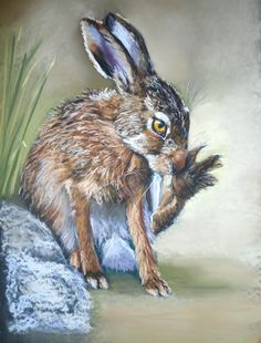 The Hare by Catherine Inglis: instructional video in soft pastels on ArtTutor.