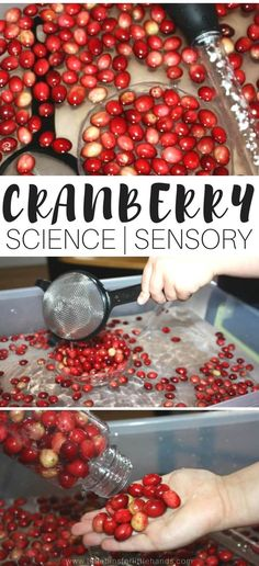 Simple and fun cranberry science activity and experiment for kids! Perfect for quick Thanksgiving science, this cranberry science experiment also doubles as a great Thanksgiving sensory play activity that takes very little effort to set up.  Food science for kids!