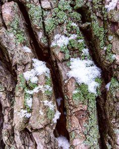 Winter details  #snow #moss #tree #nature #details #nature_perfection #naturedetails #macro #closeup #naturelovers #cold #winterdetails #berlin #berlin #schnee #mobile #htc10 #igerberlin #igersdeutschland #igersberlin #berlinbreeze #walkingaround #photographer #photooftheday