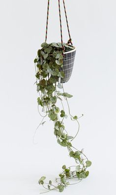 Small Hanging Planter by Dana Bechert