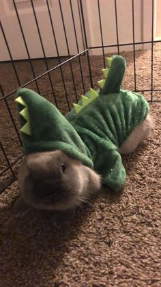 Baby Animals Pictures, Cute Animal Pictures, Cute Little Animals, Cute Funny Animals, Funny Cute, Fluffy Animals, Animals And Pets, Fluffy Cows, Pet Bunny Rabbits