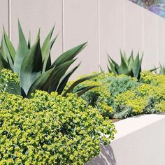 Award-winning collaborative project with landscape architect, House Landscape, Landscape Architecture, Landscape Design, Texas Gardening, Gardening Tips, Texas Plants, Planting Plan, Fence Gate, Garden Inspiration