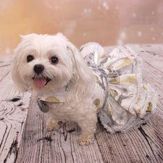 Perro perro arnés vestido vestido de Navidad por LittleDogFashion