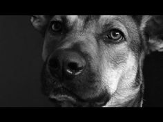 What Love Looks Like: Watch the Expressions of 58 Dogs in 4 Minutes    This video of the faces of 58 different dogs will make you want to hug your pup extra tight today. Give into it!