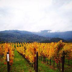 Vineyards in St. Helena, California