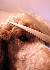 How To Trim Your Dog's Face, Feet and Tail | DIY Dog Grooming