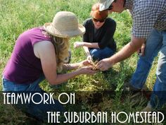 Suburban homesteading is all about self-sufficiency. You need to build a network of teamwork to help meet your goals. We tell you how to do it!