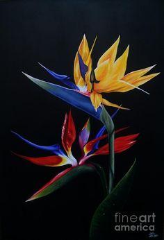 imagenes de flores aves del paraiso