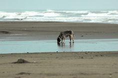 cachorro-praia-itanhaem-a-bussola-quebrada