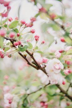 floreciendo…