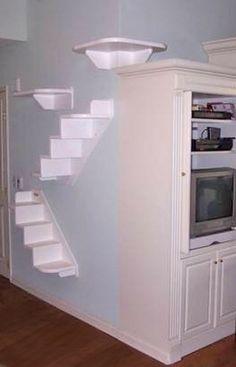 DIY CAT wall