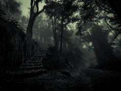 Which Way? by Tristan O'Tierney on 500px A foggy, mysterious morning at Mt Davidson, California