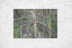 This image is of a Reed Warbler in a marshland Etsy Store, Craft Supplies, Glass Vase, Handmade Items, Wildlife, Art Print, Animal, Digital, Shop
