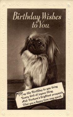 pekingese dog JAPANESE SPANIEL ? old Birthday wish photo postcard