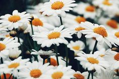 Find the perfect flower for every occasion - Enjoy Flowers Blog
