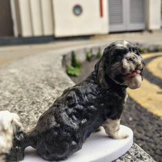 Something we liked from Instagram! We #scan #pets too!!! #dogs #puppies even #cats and #kittens #3d #3Dprinter #3dprinting #projet #projet660 #personalisedgifts #christmasgifts #amazing by my3dtwin check us out: http://bit.ly/1KyLetq