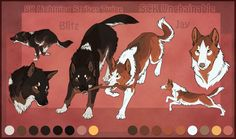 Registered Name: STS Hawker Typhoon Call Name: Vasuki Gender: Unaltered Male Age: Adult (4 years old) Height: 32 inches (Tall) Weight: 152 lbs. (Average/Slender) Breed: Central Asian Ovcharka Coat ...