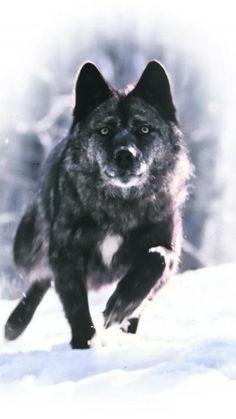 fondo-de-lobo-46