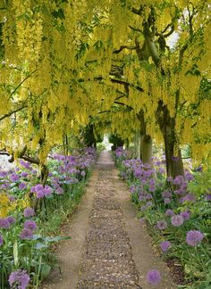 Barnsley House Laburnum Walk - we went here early in our marriage. even had the pleasure of meeting rosemary verey.