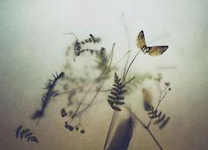 Feel the Springtime - Super soft photographs by Rachel Bellinsky