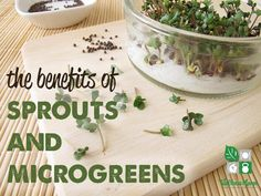 Sprouts and microgreens are potent sources of many vitamins, amino acids, minerals and cancer-fighting compounds and enzymes.