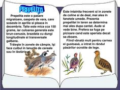 Romanian Language, Baby Education, After School, Kids And Parenting, Presentation, Childhood, Infancy, Childhood Memories, Baby Learning