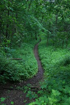 Pilot Knob State Park, Iowa.  Emerald Forest
